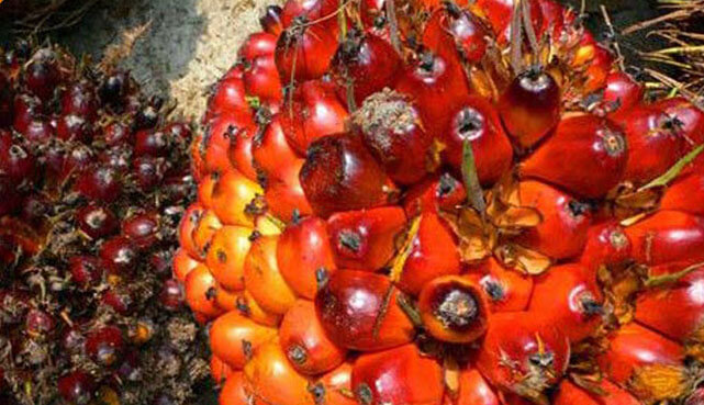 palm oil waste organic fertilizer production technology - To Rent or Lease a Property in Malaysia